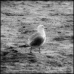 Random bit : 01 : Seagull by DecoyRobot