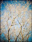Winter :  trees : 02 by DecoyRobot