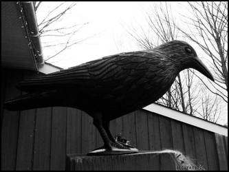 Halloween : the crow by DecoyRobot
