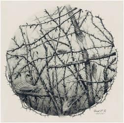 III. The Souls of Cicadas by Derek-Castro