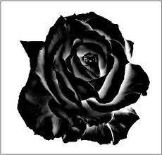Blackrose by Blackrose20111