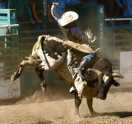 Spotty Bull II by Sheepsaymoo