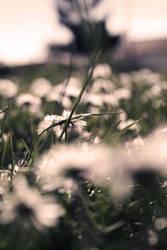 Les jours melancoliques. by My-heaven-tonight