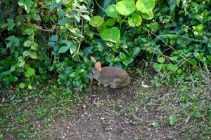 Itty bitty wabbit by Datasmurf