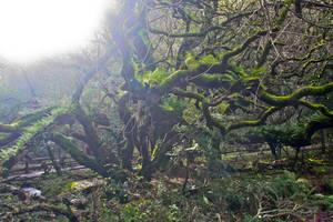 In Muir Woods 1 by Datasmurf