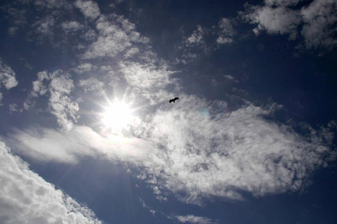 Fly like an eagle by Datasmurf