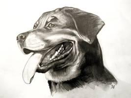 Rottweiler by Cayasha