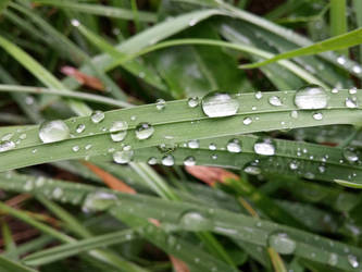 Water drops on the grass by BeebzCZ