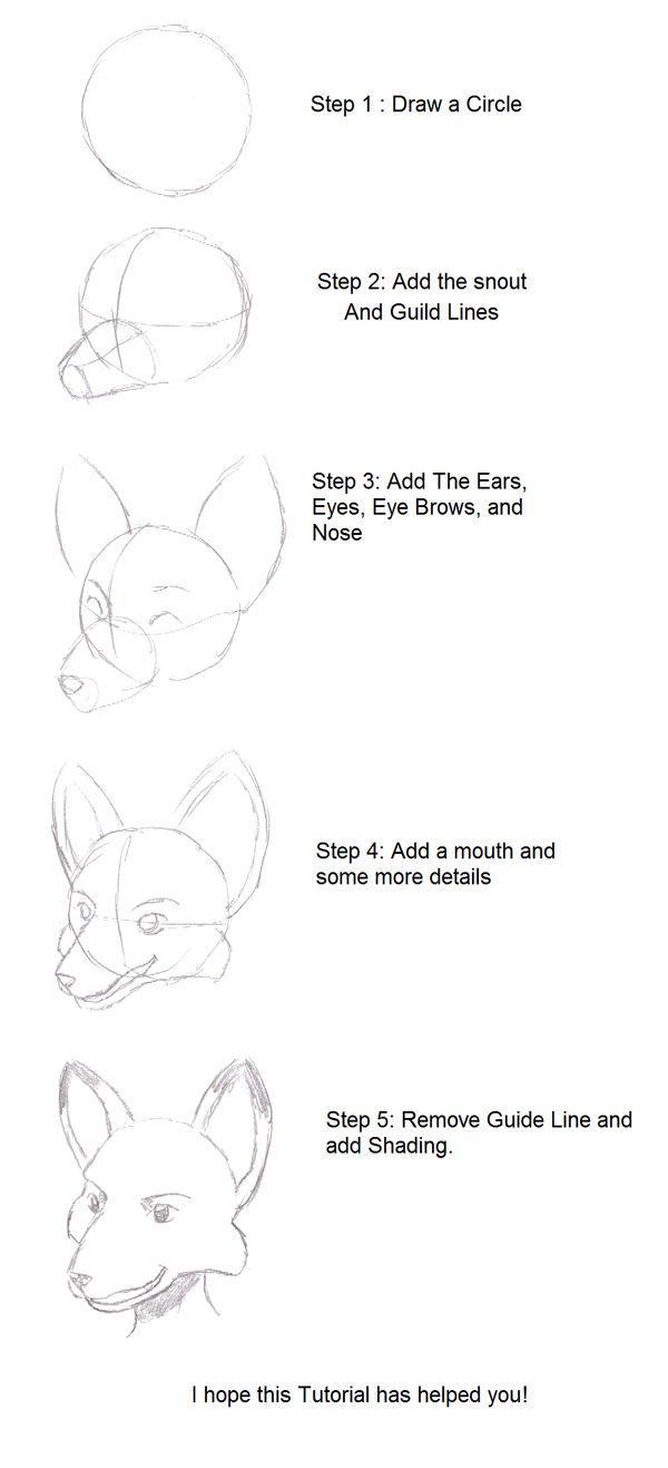 Deviantart Tutorial Head Dogs To Draw Www Galleryneed Com