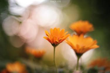 in my garden by Isagrafie