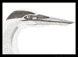 Great Blue Heron by dragonspeaker