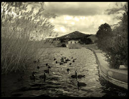 Ducks by cleo72