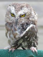 Owl Keeell You by Earleywine