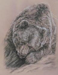 May 1st bear sketch by Earleywine