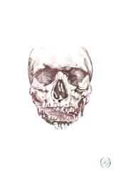Skull by The-Seldom-Seen-Kid