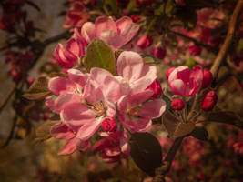 Pink Blossom by DrAndrei