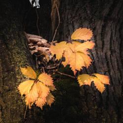 Autumn Again by DrAndrei