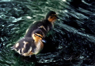 Ducklings by Lady-Tori
