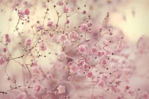 Serenity by Lady-Tori