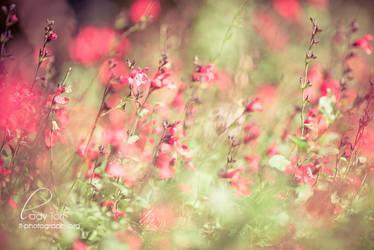 Hunter Valley by Lady-Tori
