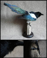 Eurasian Magpie Mount by CabinetCuriosities