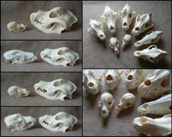 Comparison: Dog Skulls #2 by CabinetCuriosities