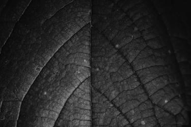 Leaf by buzzregog