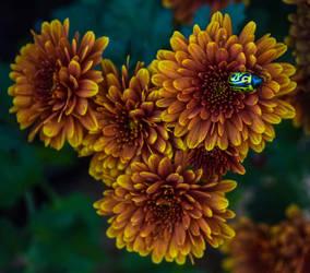 Bug by Keithspangle