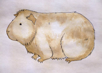 Guinea Pig Tea Coffee Painting by Crafty-lil-vixen