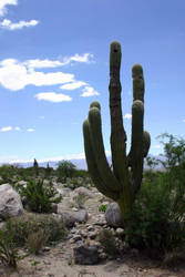 the protesting cactus by beloutte