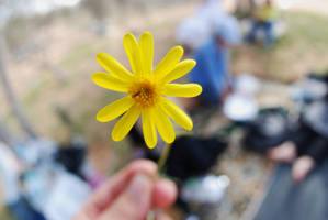 yellow flower by uae-marwan