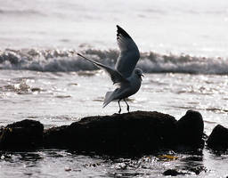 The Landing by MPMedia