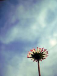 Flower by Blacky64