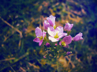 Flower 2 by Blacky64