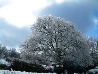 Snow tree by stramonio