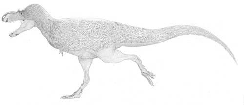 A Conservative Albertosaur by pilsator