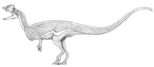A Sleek Dilophosaur by pilsator