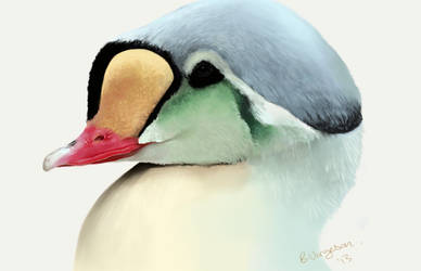 king eider by Uralowa