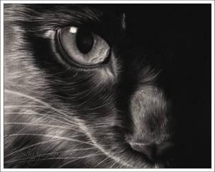 Black Beauty by Zindy