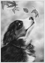 Autumn Puppy by Zindy
