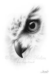Faded Owl Portrait by Zindy