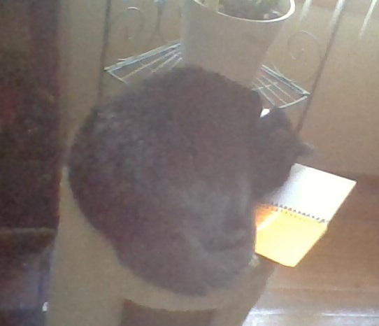 Bean Cat by TheMeepGuy