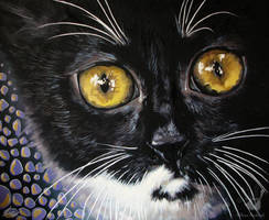 Infernal Black Kote by IlonaPankevich