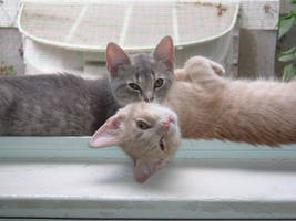 New Kittens by Aredith