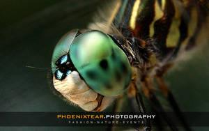 DragonFly Macro by Phoenixtear