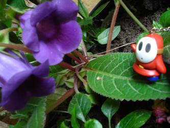 Shy Guy in Wonderland by susuka