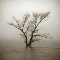 ...old tree... by OlegBreslavtsev