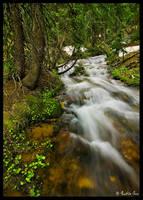 Woodland Water by ChimpyJay
