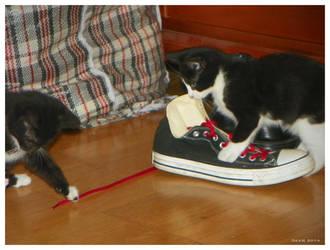 shoelaces beware by CapnDeek373