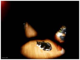 the cat in the cat by CapnDeek373